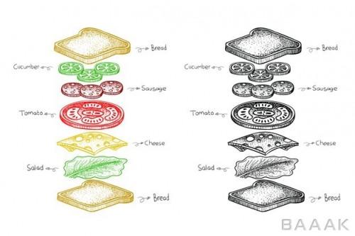 تصویر نقاشی شده از اجزای ساندویچ