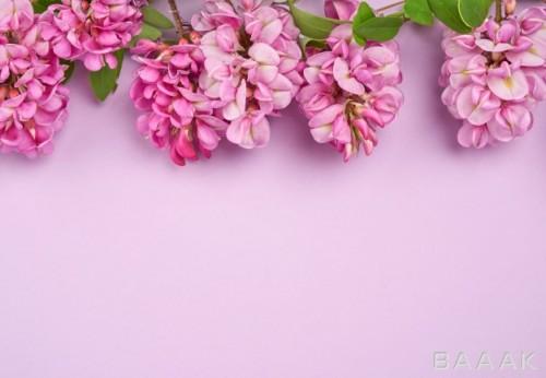 پس زمینه بنفش رنگ با گل های صورتی