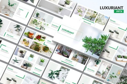 قالب ارائه مینیمال و مدرن پاورپوینت با موضوع گل و گیاه خانگی